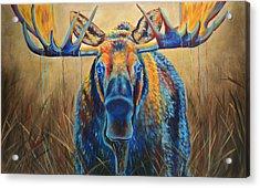Moose Marsh Acrylic Print by Teshia Art