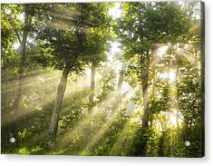 Morning Bursting Forth Acrylic Print by Andrew Soundarajan
