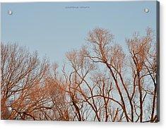 Morning Coloured In Fall Acrylic Print by Sonali Gangane