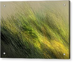 Morning Dew Drops Acrylic Print by Aaron Blaise