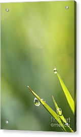 Morning Dew On Grass Acrylic Print by LHJB Photography