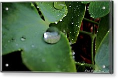 Morning Fresh Leaves With Droplets Acrylic Print by Danielle  Parent