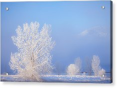 Morning Frost Acrylic Print by Darren  White