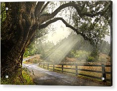 Morning Light Acrylic Print by Debra and Dave Vanderlaan