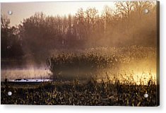 Morning Light Acrylic Print by Skip Willits