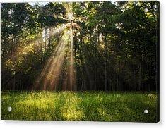 Morning Radiance Acrylic Print by Andrew Soundarajan