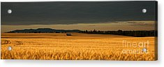 Morning's Glow Acrylic Print by Beve Brown-Clark Photography