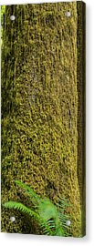 Moss Covered Tree Olympic National Park Acrylic Print by Steve Gadomski