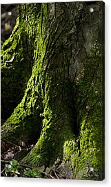Moss Covered Tree Trunk Acrylic Print by Christina Rollo