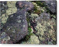 Moss On Rock-lubec-maine Acrylic Print by Harold E McCray