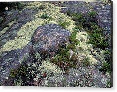 Moss On Rock-lubec-maine II Acrylic Print by Harold E McCray
