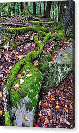 Moss Roots Rock And Fallen Leaves Acrylic Print by Thomas R Fletcher
