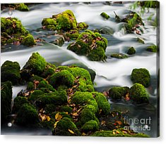 Mossy Spring Acrylic Print by Shannon Beck-Coatney