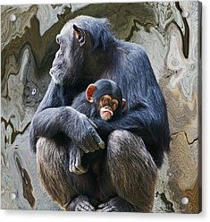 Mother And Child Chimpanzee 2 Acrylic Print by Daniele Smith