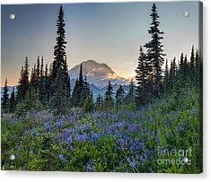 Mount Rainer Flower Fields Acrylic Print by Mike Reid