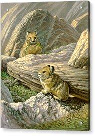 Mountain Haymakers - Pika Acrylic Print by Paul Krapf