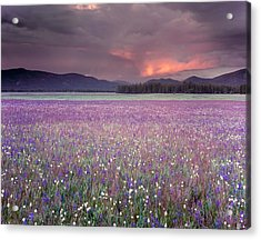 Mountain Meadow Purple Acrylic Print by Leland D Howard