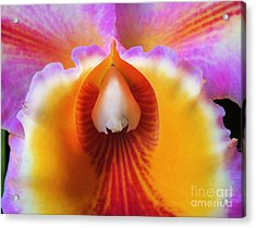 Mouth Of An Orchid Acrylic Print by Kristine Merc