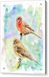 Mr And Mrs House Finch - Digital Paint Acrylic Print by Debbie Portwood