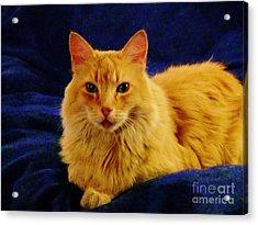Mr. Bear Cat - Il Acrylic Print by Jacquelyn Roberts
