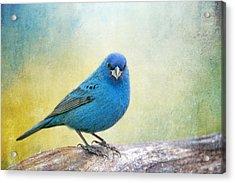 Mr. Blue Acrylic Print by Bonnie Barry