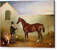 Mr Meakin Holding Sir Robert Peels Chestnut Hunter With His Dogs Hector And Jem Acrylic Print by John E Ferneley