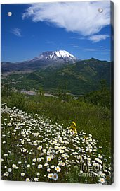 Aster Acrylic Print featuring the photograph Mt. St. Helens View by Mike Dawson