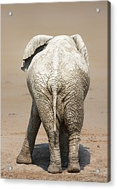 Muddy Elephant With Funny Stance  Acrylic Print by Johan Swanepoel