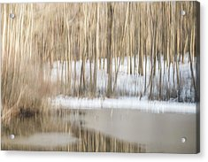 Multiple-exposure Of Trees In Winter Acrylic Print by Rona Schwarz
