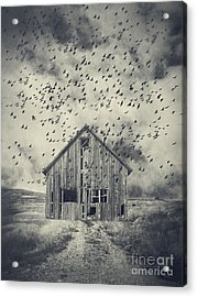 Murder Of Crows Acrylic Print by Edward Fielding