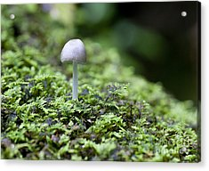 Mushroom Acrylic Print by Steven Ralser