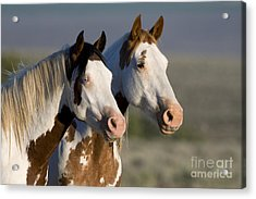 Mustang Mare And Son Acrylic Print by Jean-Louis Klein and Marie-Luce Hubert