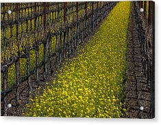 Mustrad Grass In The Vineyards Acrylic Print by Garry Gay
