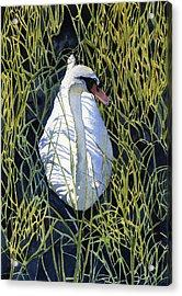 Mute Swan Acrylic Print by Heidi Gallo