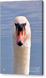 Mute Swan Staring Acrylic Print by Susan Wiedmann