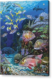 Mutton Reef Re002 Acrylic Print by Carey Chen