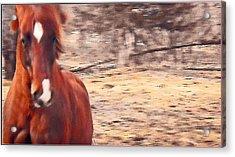 My Fine Friend The Flashy Chestnut Stallion Acrylic Print by Patricia Keller
