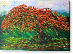 My Flamboyant Tree Acrylic Print by Estela Robles Galiano