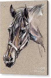 My Horse Portrait Drawing Acrylic Print by Daliana Pacuraru