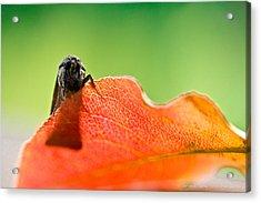 My Leaf Acrylic Print by Shane Holsclaw