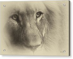 My Lion Eyes In Antique Acrylic Print by Thomas Woolworth