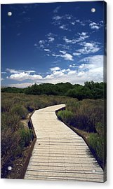 My Mind Wanders Acrylic Print by Laurie Search