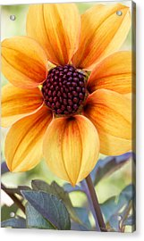 My Sunshine Acrylic Print by Heidi Smith