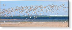 My Tern Acrylic Print by Bill Wakeley