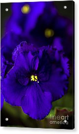My Violet II Acrylic Print by Tamyra Ayles