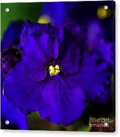 My Violet IIi Acrylic Print by Tamyra Ayles