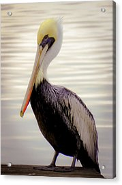 My Visitor Acrylic Print by Karen Wiles