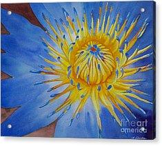 Myanamar Lily Acrylic Print by Amanda Schuster