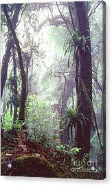Mysterious Misty Rainforest Acrylic Print by Thomas R Fletcher