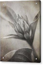 Mystic Anticipation Acrylic Print by Dale Kincaid